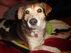 Parents Name: Lana Pets Name: Honey Pet Species: Dog Pets Favorite thing to do: Running in the backyard, snuggling Eulogy: We got Honey from a shelter when she was about 4-6-years-old. The vet was ...