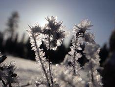 Jääkuningattaren puutarhassa Ice Queen's garden