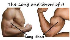 Long head and short head biceps