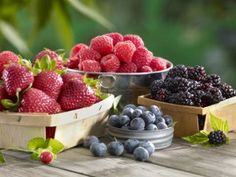 So many people forget berries in gardens...such a tragedy.