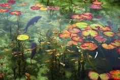 Summer water ..........by Yohei Okada