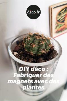 Les plantes s'invitent partout dans la déco, on vous propose d'en mettre dans la cuisine, mais pas n'importe où. On vous explique comment ajouter de la verdure sur le frigo. Comment ? Simplement en suivant les étapes de ce nouveau DIY déco. Un tuto qui vous explique comment fabriquer des magnets végétaux ! Magnet, Ajouter, Diy Room Decor, Plants, Kitchens