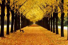 Golden Age by Fotokunst Freulein K  on 500px
