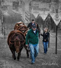 Legacy Livestock Photo <3