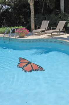 custom monarch butterfly design by artistry in mosaics get a free quote at aquablu