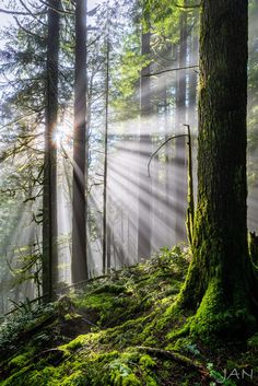 *🇨🇦 Morning trek at sunrise on the Spirea Nature Trail (Golden Ears Provincial Park, BC) by Jason Newman on 500px 🌲 Magical Forest, Beautiful Forest, Tree Forest, Beautiful World, Beautiful Places, Forest Photography, Landscape Photography, Jigsaw, Nature Photos