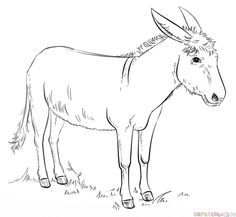 How to draw a donkey step by step. Drawing tutorials for kids and beginners.