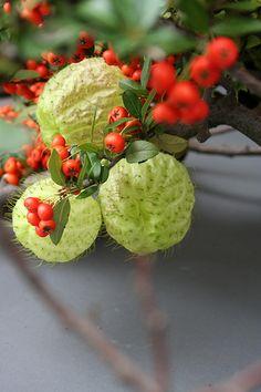Ikebana with fall favorites | Flickr: partage de photos!