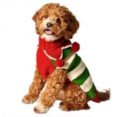 cheerful puppy