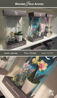 Geurstokjes en mini phalaenopsis samen in een cadeauverpakking! Wonder Fleur Aroma zorgt voor de natuurlijke balans in uw huis. De collectie bestaat uit drie geuren, in combinatie de orchidee zorgt dit voor een overheerlijke geur-plant oase. De drie geurbelevingen: Exotic Orchids, Pure Orchids en Sweet Ochids, hebben elk hun eigen luxe uitstraling en bijpassend parfumflesje. Waardoor het product een echt cadeautje is om te geven. Ontwerp gemaakt door Mangoa iov FloraHolland en TrendLogic Felt Flowers, Diy Flowers, Flower Decorations, Paper Flowers, Candle Packaging, Flower Packaging, Cherry Blooms, Bouquet Wrap, How To Wrap Flowers