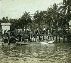 Banana Wharf and Coconut Plantation, Jamaica, 1899