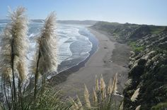 Photo of the week: Manu Bay in Raglan New Zealand … surfers paradise The Beautiful Country, Beautiful World, Raglan New Zealand, New Zealand Beach, New Zealand Houses, Photos Of The Week, Adventure Is Out There, Beach Photos, Beach Trip