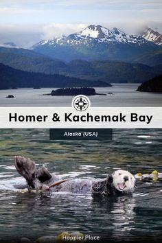 Kachemak Bay and Homer, Alaska where you can see puffins, eagles, murres, sea otters, and whales - and  mountains rising from the sea.    #HappierPlace #Alaska Homer Alaska, Alaska Usa, Alaska Travel, Canada Travel, Travel Usa, Travel Tips, Alaska Cruise, Travel Articles, Travel Abroad