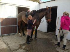 Connemara Equestrian Escapes - Horse Riding Holidays In Ireland Riding Holiday, Ireland Holiday, Connemara, Horse Riding, Horseback Riding, Equestrian, Exploring, Horses, Holidays