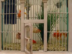 With a fish bowl set inside, this birdcage is a funny aquarium that gives the illusion that the fish can swim out into the room. Source: Fli...