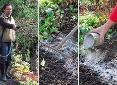 Identifier et corriger les carences  Ni très malades, ni totalement en pleine forme, les plantes font parfois grise mine. Un manque de certains éléments dans leur alimentation en est souvent la cause.