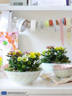 The Pot Mum is the Houseplant of the month of October 2014 kwiatypolskie.net.pl