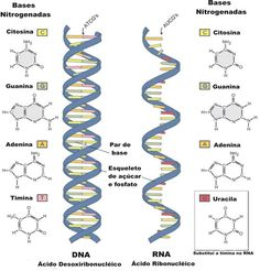 DNA e RNA - Só Biologia                                                       …