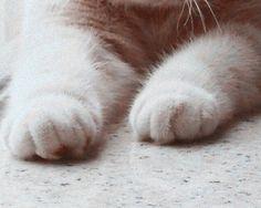 「ちょこん」だけで悶絶死できる。猫の肉球&前足画像を集めてみた。 : カラパイア