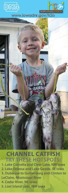 Try these hot spots for your next stringer full of channel Destin Fishing, Kayak Fishing, Channel Catfish, Clear Lake, Hot Spots, Mississippi, Iowa, Kayaking, Wilderness