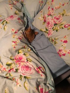 Boyfriend sent me this before he left for work. At least someone is getting a lie in by pepperite cats kitten catsonweb cute adorable funny sleepy animals nature kitty cutie ca