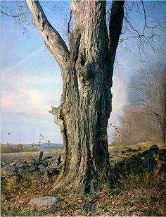 Trees On A Line by Trey Friedman. This is a painting, not a photograph.