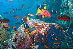 Poster Galapagos Inseln - Unterwasserwelt bunter tropischer Fische