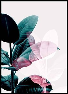 Ficus exposure Poster in der Gruppe Poster / Botanik bei Desenio AB Painted Lines – Stefanie JaryPoster mit Graphic art, Illustration der Silhouette…Poster Ficus, Desenio Posters, Gold Poster, Groups Poster, Plakat Design, Plant Wallpaper, Modern Art Prints, Botanical Prints, Botanical Posters