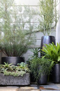 Wonderful collection of black modern contemporary planters and pots with green plants! So gorgeous against the pale gray wall! Indoor planters or outdoor planters! Garden Spaces, Balcony Garden, Garden Planters, Potted Garden, Indoor Planters, Container Plants, Container Gardening, Plant Containers, Outdoor Plants