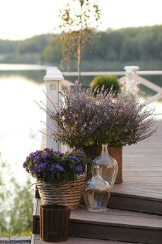 Container gardening design 4971961097 to replicate today. Patio Fence, Pot Jardin, Cottage Living, Plantation, Types Of Plants, Balcony Garden, Garden Inspiration, Container Gardening, Garden Landscaping