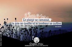 www.grainededen.com Le plaisir se ramasse, la joie se cueille et le bonheur se cultive.  – BOUDDHA – #citation #développementPersonnel #affirmationspositives
