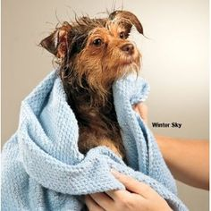 Smart Dry Pet Towel Set Color: Aloe Green