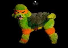 ----Tigga----- Photoshoot for Creative Canines Toowoomba Qld --- Owned By Taryn Binstead -- Won A Groomiming Comp