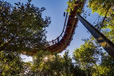 tree-canopy-walkway-path-kirstenbosch-national-botanical-garden-14