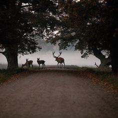 An incredible capture of the deer of Dyrehaven 📷 by @mikecollinge⠀ .⠀ .⠀ .⠀ .⠀ .⠀ #deer #dyrehaven #copenhagen #denmark #naturephotography #animalphotography #ohdear  #Regram via @BvL_tg4A_5R