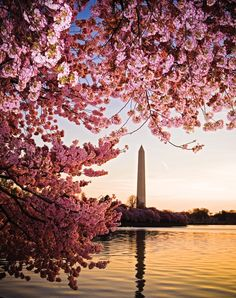 How to photograph Washington DC's famous cherry blossoms (many surrounding our national monuments!)