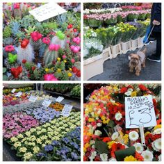 Columbia Road Flower Market, a pre-walk walk for Day 22. One of my favourite places :) #walking #London #congestionzone #columbiaroad