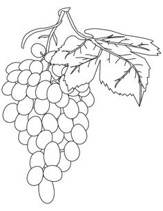 Red grapes coloring pages | Download Free Red grapes coloring pages for kids | Best Coloring Pages