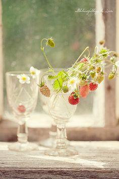 Strawberry Dreams by loretoidas, via Flickr