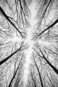 Photo about Black and white forest of trees photographed from below - the effect abstract . Image of pattern, forest, natural - 45723864 Black And White Tree, Black And White Pictures, Wallpaper Schwarz, Forest Painting, Black Leaves, Photo Tree, White Aesthetic, Abstract Photography, Winter Photography