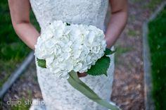 Beautiful white hydrangea