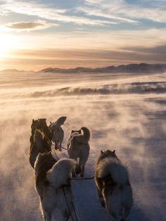 Chiens de traîneaux en Islande via Extreme Iceland !