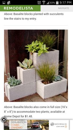 Unconventional planter using cinder blocks.