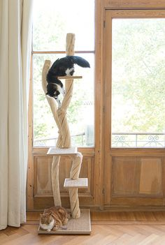 Lovely cat tree shape with lots of scratching possible! Crazy Cat Lady, Crazy Cats, Diy Cat Tree, Living With Cats, Cat Enclosure, Cat Room, Tree Shapes, Cat Wall, Cat Supplies