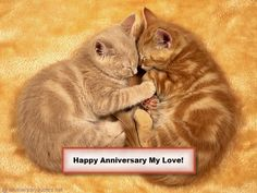 Kittens are cute and adorable. Cute cuddling kitten pictures are the most beautiful cat pictures in the world. Here are the top 24 very cute cuddling kitten pictures that will […] Kitten Love, I Love Cats, Crazy Cats, Grey Kitten, Cute Kittens, Tabby Kittens, Beautiful Cats, Animals Beautiful, Baby Animals