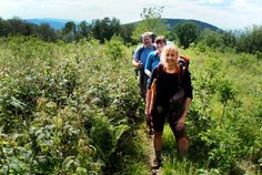Take a Hike with Blue Ridge Hiking Company — Overland Expo® October 5th, Drive Time, All I Ever Wanted, Edible Plants, Blue Ridge Mountains, Appalachian Trail, 4 Hours, Local History, Day Hike