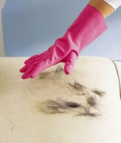 Dampen one of your rubber gloves a little, and then use it to remove pet hair from furniture. The damp rubber material is like a magnet to h...