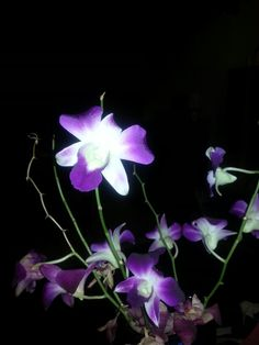 Orchids from Anna