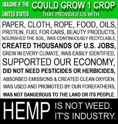 Don't forget, industrial hemp won't make anyone high! There are no psychoactive ingredients in industrialized hemp. Put a hemp plant next to your organic garden!