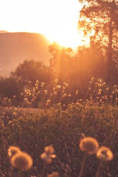 ~ Sunsets' blankets drawn slowly over the flower bed meadows, out across the countryside, which all the while, is embracing the warmth of the sun's last kiss.